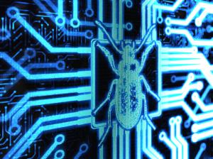 Bug2-300x224